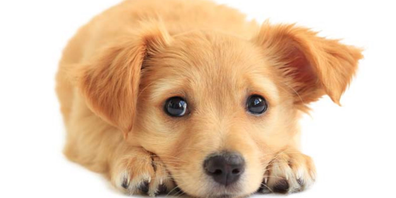County to Borrow $31M for New Animal Shelter