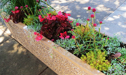 Partners in Bloom to Beautify Downtown  Morro Bay