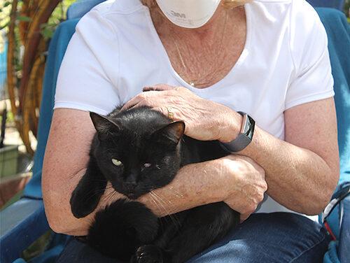 Reward for Kitty Cat Killer
