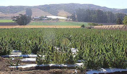 Ag is Still King in SLO County