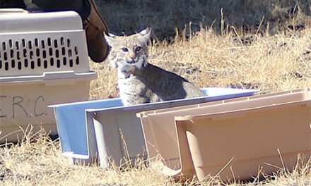 Pacific Wildlife Care to Move