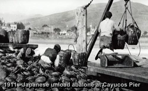 Still from Morro Bay Abalone film