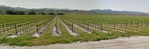 Vineyard on Hwy 46